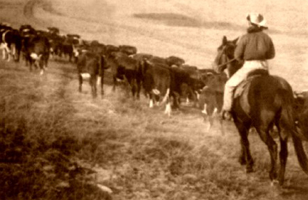 Texas Panhandle Ranching